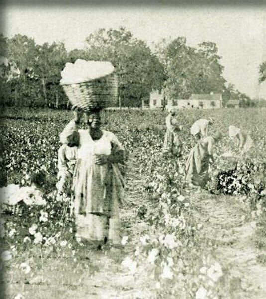 Song from a Cotton Field - di Bessie Brown
